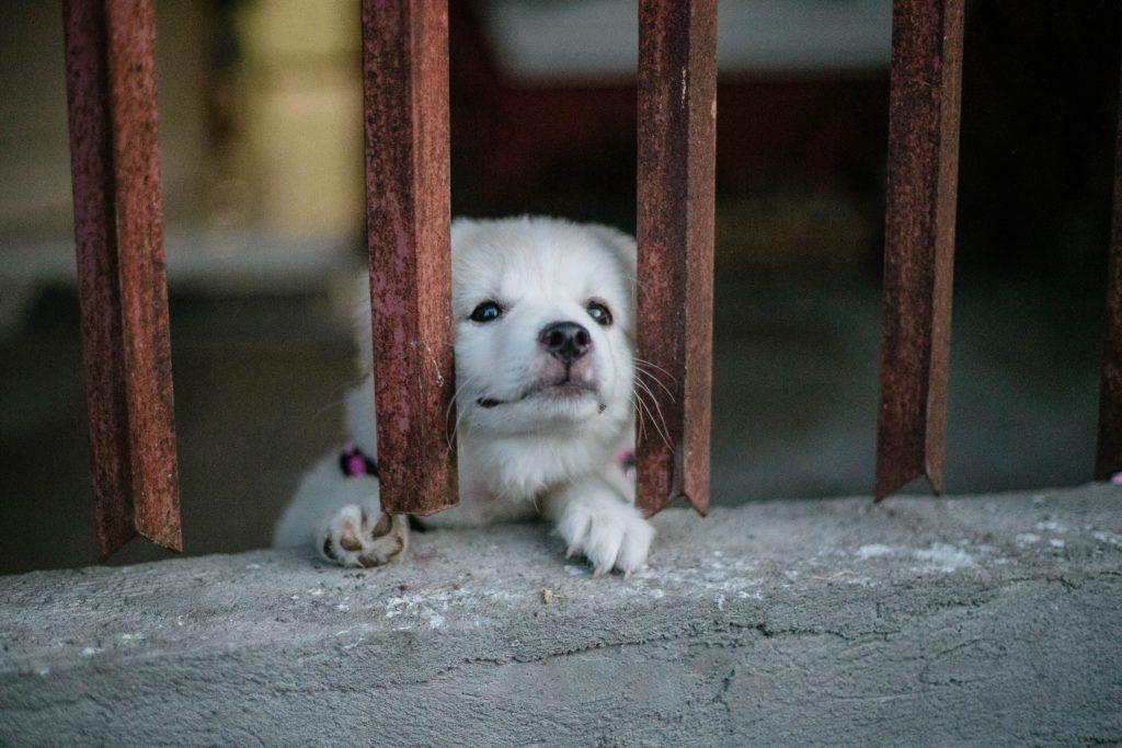 ゲージの奥にいる犬