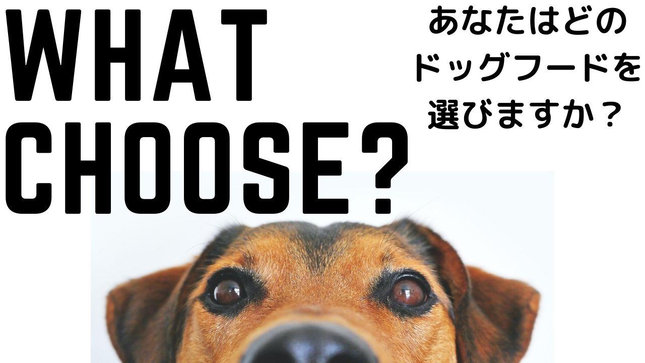 問いかけている犬