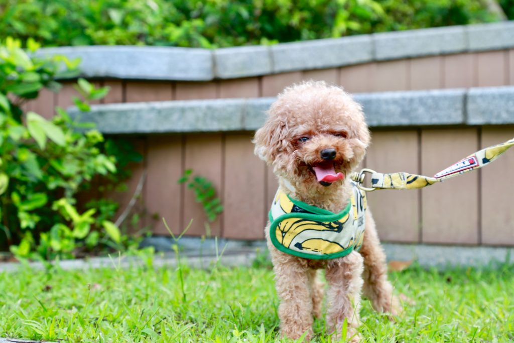 飼い犬の登録