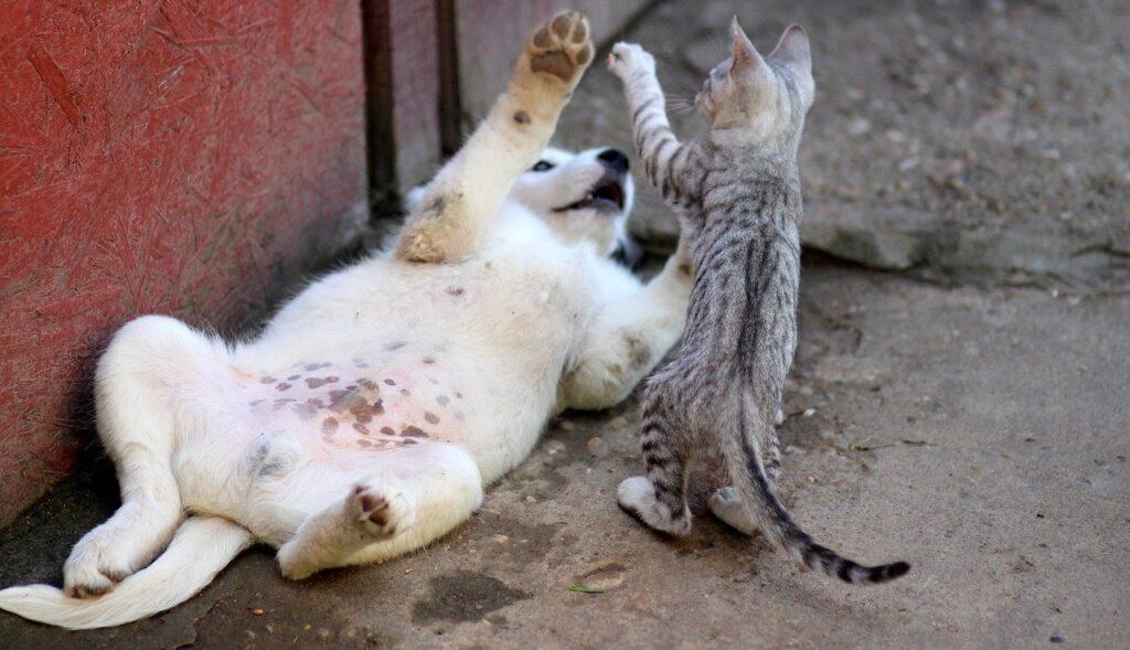 犬と猫がじゃれ合う画像