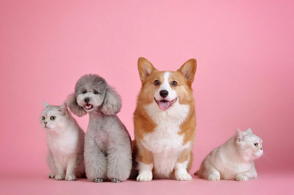 トイプードルの子犬を飼う費用