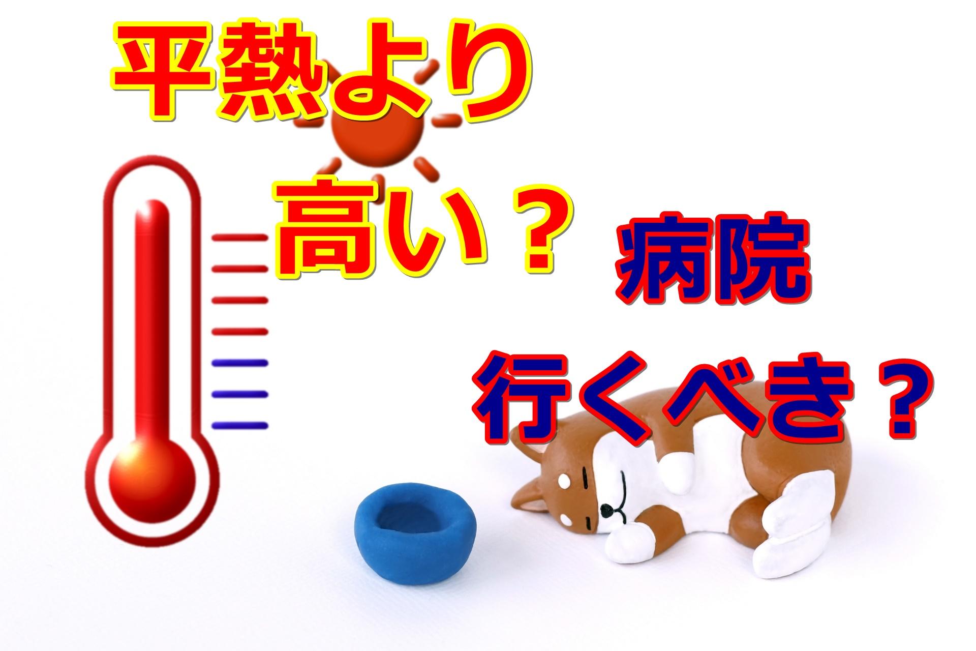 トイプードルの平熱は何度?すぐに病院に行くべき?