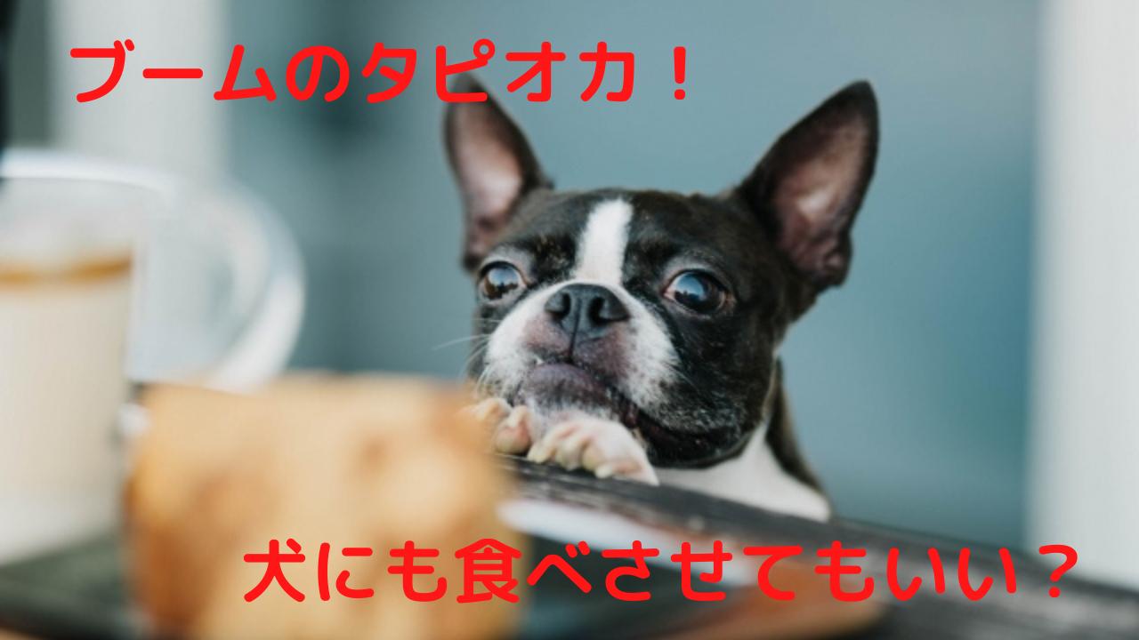 犬 タピオカ